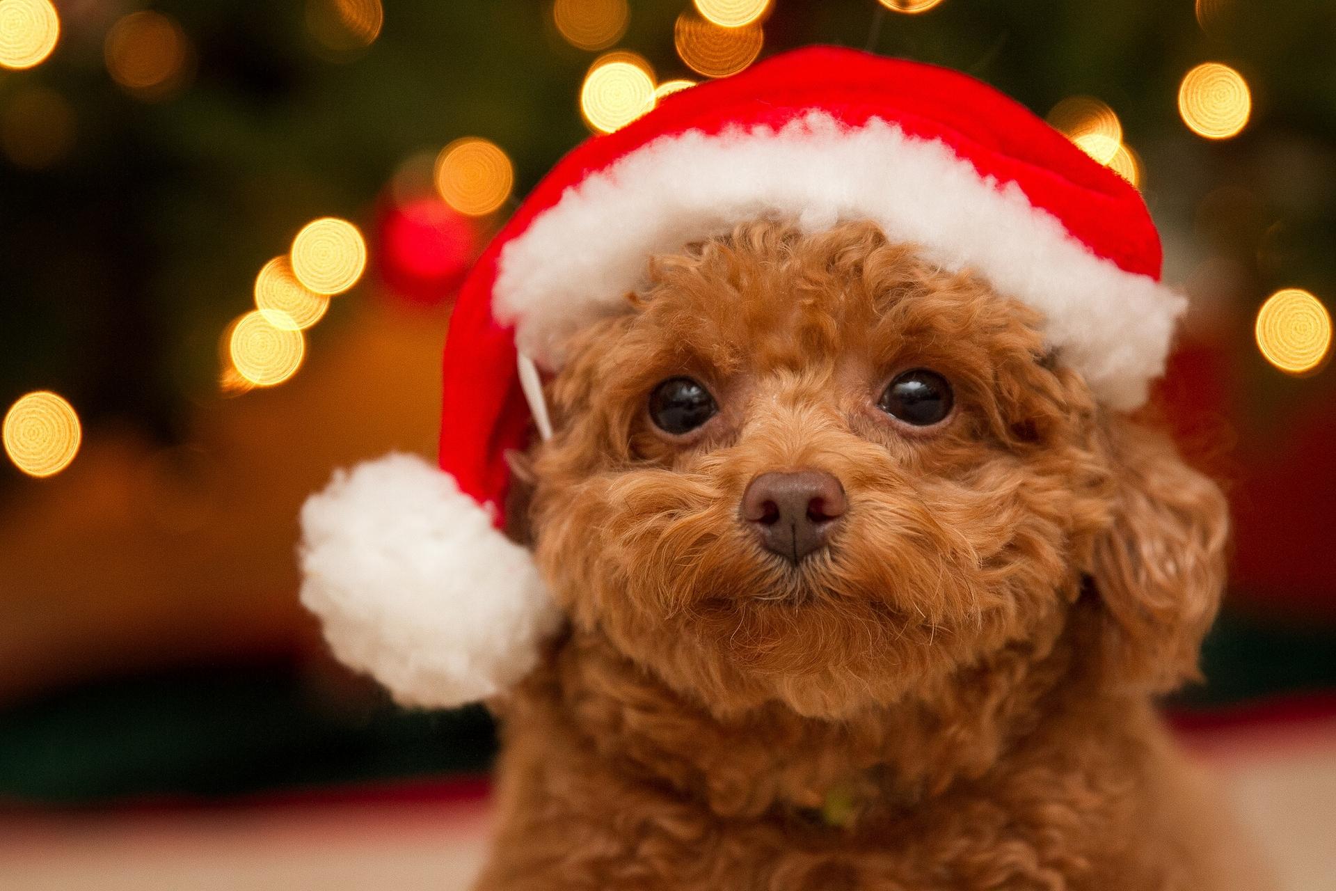 Смешные картинки с собаками на новый год
