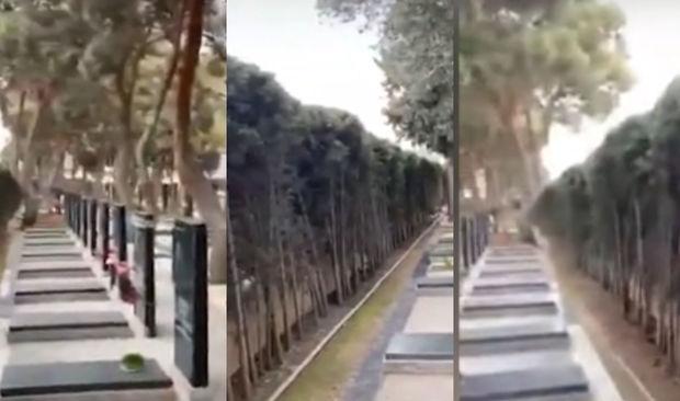 Şəhidlər Xiyabanında məzarların qarşısı ağaclarla kəsilib? - VİDEO