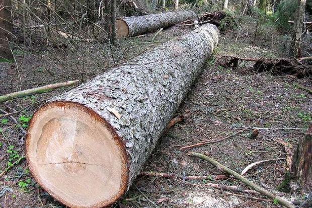 Qubada vətəndaşa məxsus torpaq sahəsində 18 600 manat dəyərində ağac kəsili ...