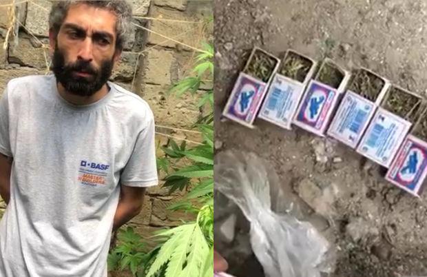 Bakıda narkotik bitkilər əkib-becərən şəxs tutuldu