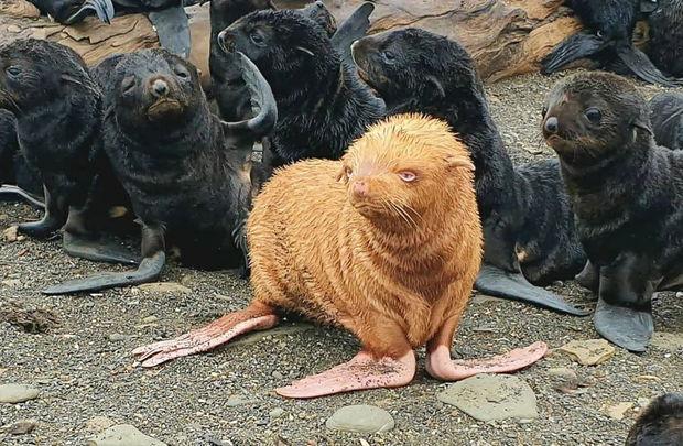 Nadir rəngdə olan dəniz pişiyi böyük marağa səbəb oldu