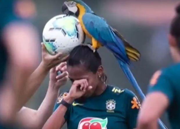 Futbolçu qızların məşqi qeyri-adı səbəbdən yarımçıq qaldı - VİDEO