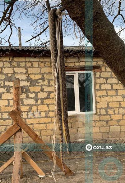 Azərbaycanda evin həyətindən altı metrlik ilan tapılıb